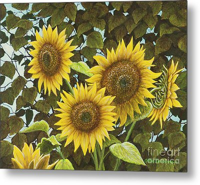 Summer Quintet Metal Print by Marc Dmytryshyn