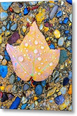 Summer Rain Leaf Metal Print