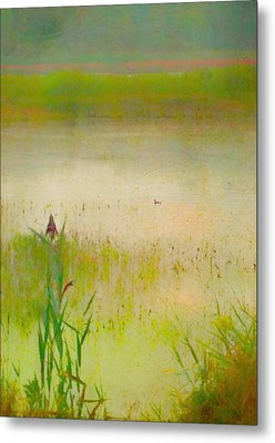Summer Reeds Metal Print by Catherine Alfidi