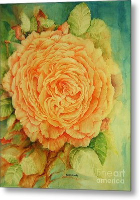 Summer Rose Metal Print by Rachel Lowry