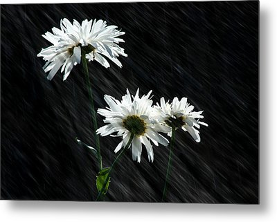 Summer Showers Metal Print by Barbara  White
