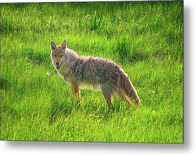 Summer Stroll Metal Print by Greg Norrell
