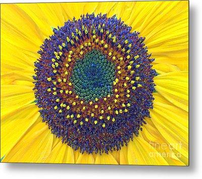 Summer Sunflower Metal Print