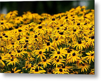 Summer Time Is Here Metal Print by Paul SEQUENCE Ferguson             sequence dot net