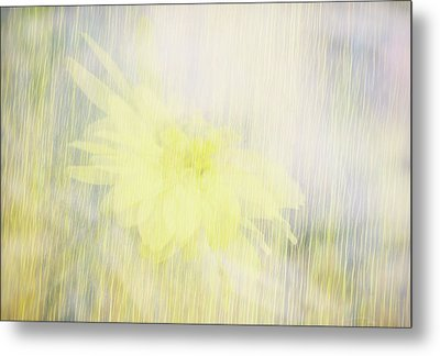 Metal Print featuring the photograph Summer Whisper by Ann Powell