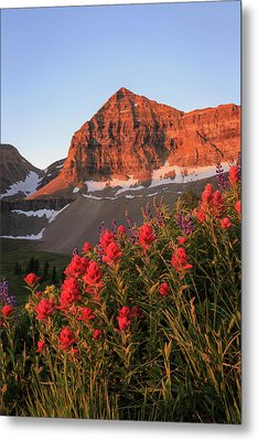 Metal Print featuring the photograph Summer Wildflowers On Timpanogos. by Johnny Adolphson