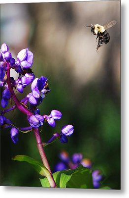 Metal Print featuring the photograph Summertime by Margaret Palmer