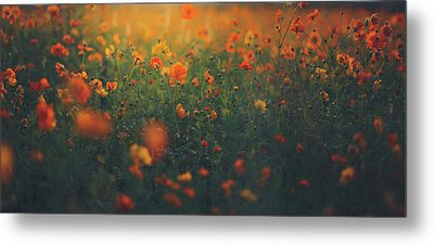Metal Print featuring the photograph Summertime by Shane Holsclaw