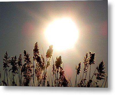 Sun And Grass 2  Metal Print by Lyle Crump