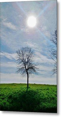 Sun And Tree Of Stillness Metal Print