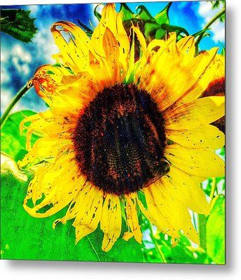 Metal Print featuring the photograph Sun by Jame Hayes