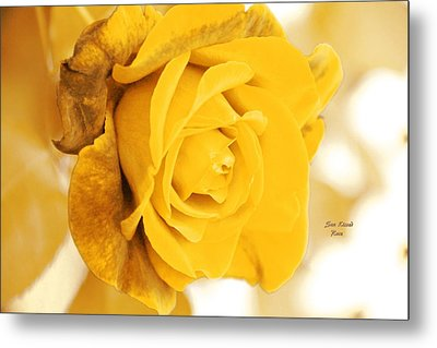 Metal Print featuring the photograph Sun Kissed Rose by Athala Carole Bruckner