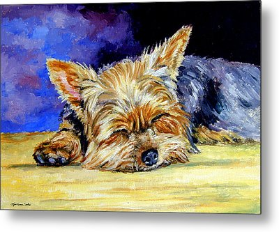 Sun Light Snoozer - Yorkshire Terrier Metal Print by Lyn Cook