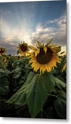 Metal Print featuring the photograph Sun Rays  by Aaron J Groen