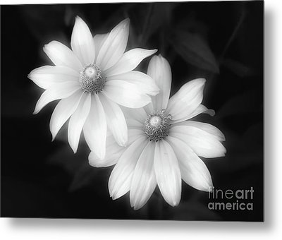 Sun Sisters In Black And White Metal Print
