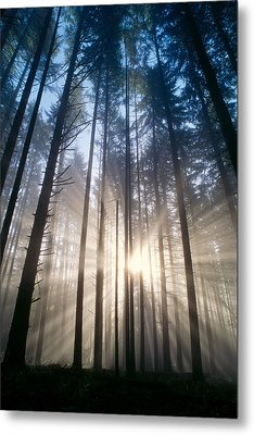 Sunburst In The Forest Metal Print by Greg Vaughn - Printscapes