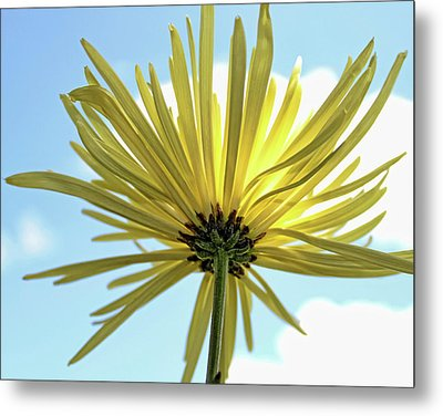 Metal Print featuring the photograph Sunburst by Judy Vincent