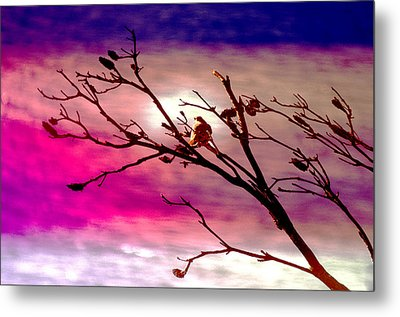 Sundown Metal Print by Holly Kempe