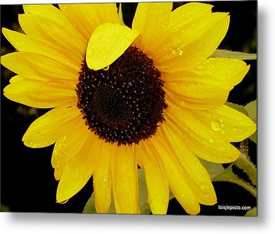 Metal Print featuring the photograph Sundrops by Lois Lepisto