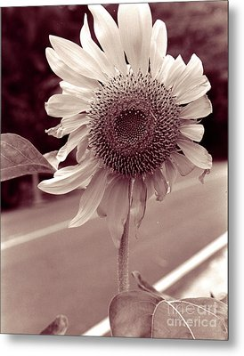 Metal Print featuring the photograph Sunflower 1 by Mukta Gupta
