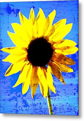 Sunflower 12 Metal Print by Marty Koch