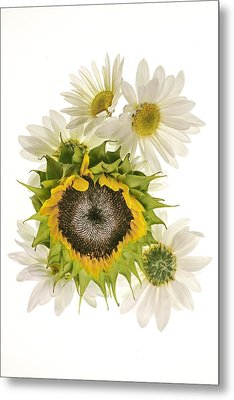 Sunflower And Daisies Metal Print by Roman Kurywczak