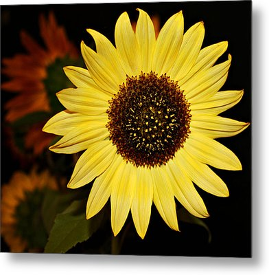 Sunflower Metal Print by Cathie Tyler