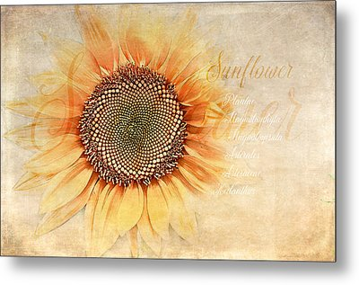 Sunflower Classification Metal Print