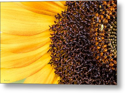 Metal Print featuring the photograph Sunflower Closeup by Bob Orsillo