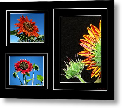 Metal Print featuring the photograph Sunflower Collage by Joyce Dickens