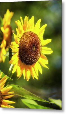 Metal Print featuring the photograph Sunflower Field by Christina Rollo