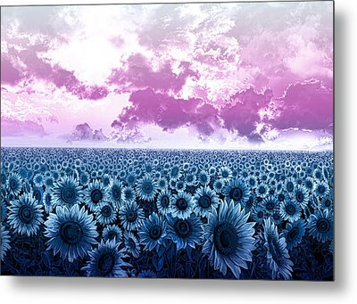 Sunflower Fields 3 Metal Print