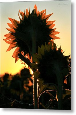 Metal Print featuring the photograph Sunflower Greeting  by Chris Berry