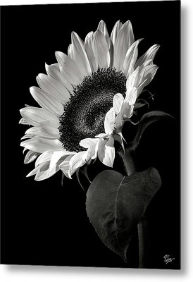 Sunflower In Black And White Metal Print by Endre Balogh
