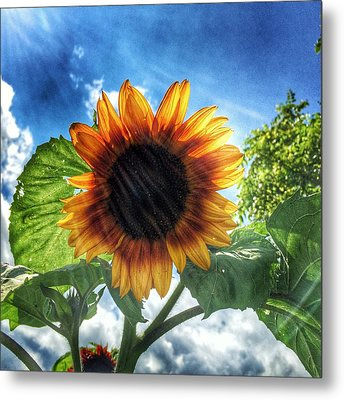 Metal Print featuring the photograph Sunflower by Jame Hayes