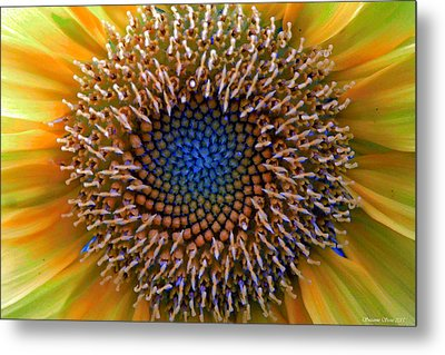 Sunflower Jewels Metal Print by Suzanne Stout