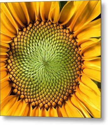 Sunflower Metal Print by John Foxx