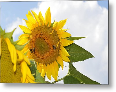 Metal Print featuring the photograph Sunflower by Linda Geiger