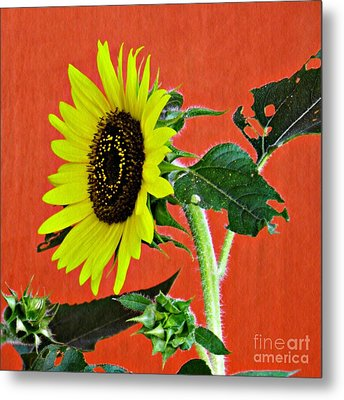 Metal Print featuring the photograph Sunflower On Red 2 by Sarah Loft