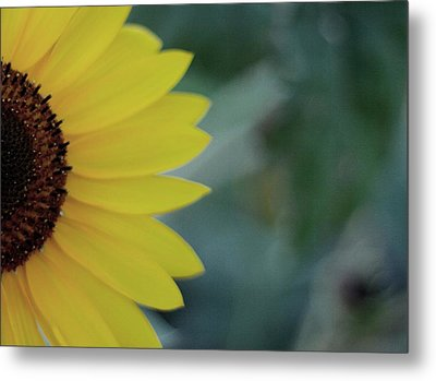 Sunflower Peeking.. Metal Print