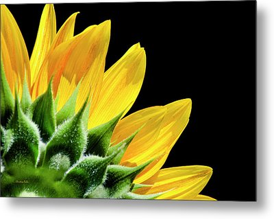 Metal Print featuring the photograph Sunflower Petals by Christina Rollo