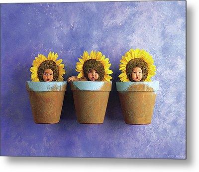 Sunflower Pots Metal Print by Anne Geddes