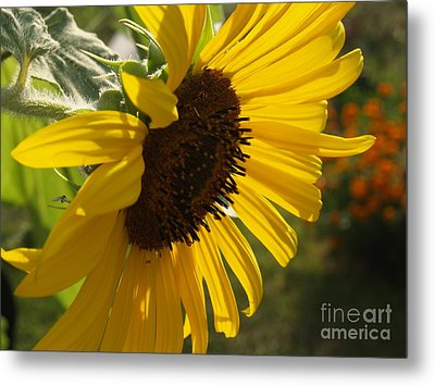 Sunflower Profile Metal Print by Anna Lisa Yoder