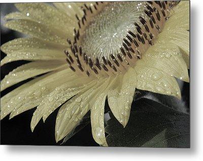 Sunflower Rain Metal Print by Carolyn Stagger Cokley