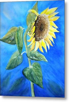 Sunflower  Metal Print by Sandy Fisher