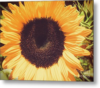 Sunflower Metal Print by Scott and Dixie Wiley