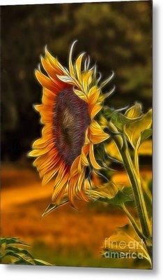 Sunflower Series Metal Print