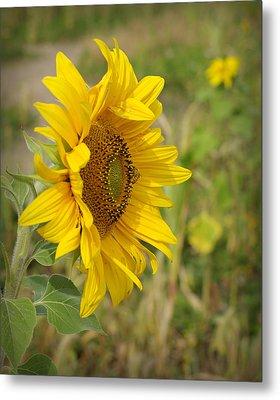 Sunflower Show Off Metal Print by Linda Mishler