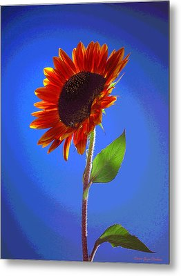 Metal Print featuring the photograph sunflower Solitaire by Joyce Dickens