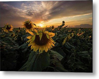 Metal Print featuring the photograph Sunflower Sunstar  by Aaron J Groen